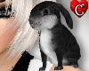 CC Bunny black