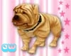 Shar Pei Dog with Collar