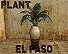 [M] EL PASO Plant
