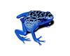[AR]Blue Dart Frog