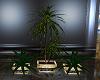 ~D~ R.o.o.M. Plant Set