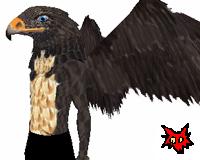 Massive Hawk wings