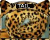 Bengal * Tail V3