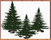 Pine Trees (Deco)
