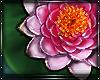 Dreamer Flower