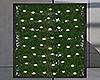 Ivy Plants+Lights