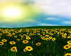 Animated Sunflower Field
