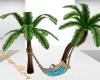 SE-Beach Hammock Palms