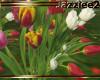 J2 Spring Flowers Tulips