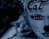 (RN) BoSy CaT Eyebrows3