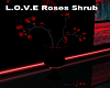 L.O.V.E  Red Roses Shrub