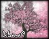 *LL* Sakura tree 2