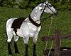 Horse & Trough 1
