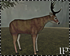 Deer Animated Forest