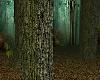 Scottish Pine Forest