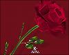 |< Romantic! Rose!