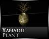 [Nic]Xanadu  Vase Plant