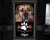 Tiger R.I.P