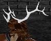 ~069~ Elk Antlers