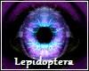 Lepidoptera Elf Eyes