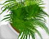 !Q! Potted Plant V5