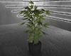 ☠ Mari's Plant