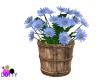 blue daisy bucket
