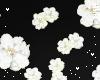 n| Flowers White
