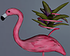 Flamingo Cactus Plant1