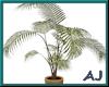 (A) Tropical Plant 2