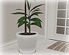[Luv] Plant 7