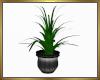 Lovely Plant