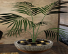Dusk / Plant 2