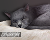 C| Sleeping Cat