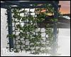 Greek pergola plant