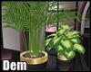 !D! Oriental Plant II