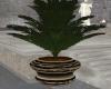 Amara Plant 1