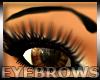 Arch Eyebrows