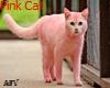 pink cat (PEMPE KEDI)