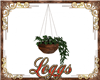hanging ivy pot