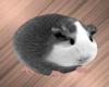 Hamster Avatar F/M