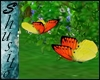 """"""".Flying Butterfly.""""YeOr"""