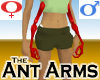 Ant Arms