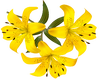 Yellow Top Lillies -L