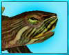 Pond Turtle Decor