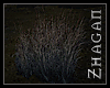 [Z] oracle grasV2