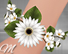 m: Spring White Brace L