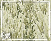 c Feather Grass