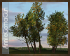 Sunset Tree Grouping