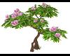 Pink Flowering Tree...